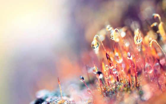 природа, макро, капли, роса, февраль, march, martha, природы, листва, день,