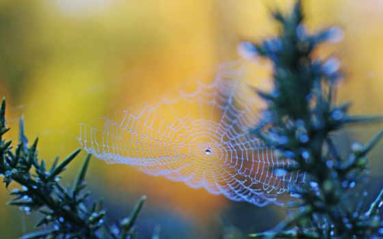web, природа, страница, роса, water, макро, капли, паяци, телефон, красивые,