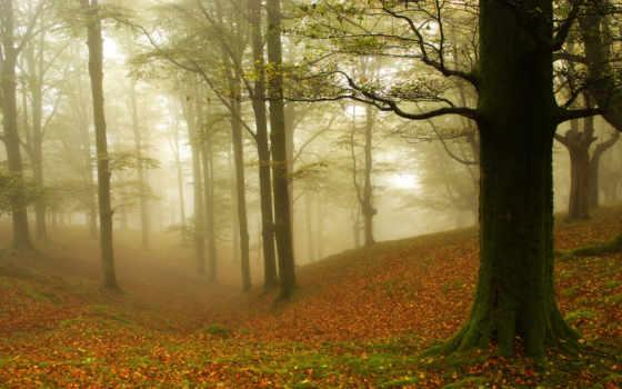 fore, дерево, high, leaf, природа, widescreen