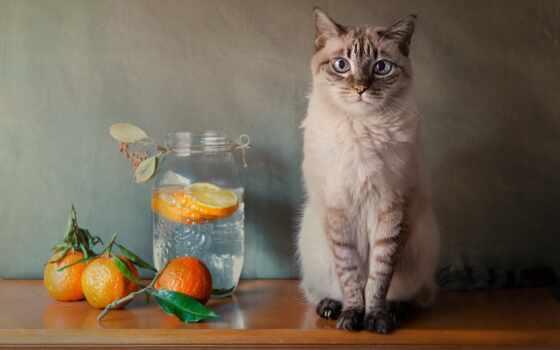 glass, баночка, фон, компьютер, плод, squite, фото, nexus, кот