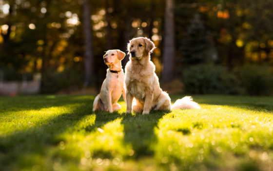 собаки, животные