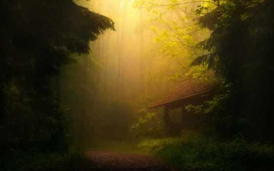 nature, landscapes, trees, кнопкой, пейзажи, деревья, нажав, кнопку, сверху, обою, кликнуть, левой, же, мышки, обоине,