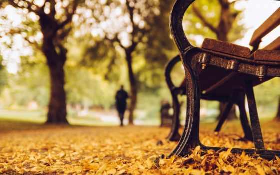скамейка, park