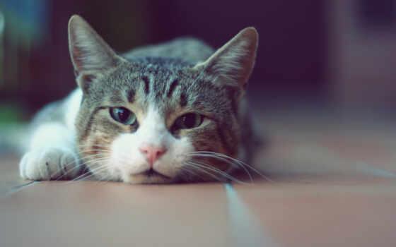 кот, котэ, базе