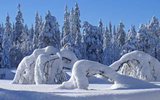 winter, природа, дек
