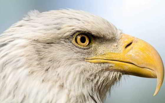 клюв, птица, орлан Фон № 107962 разрешение 1920x1080