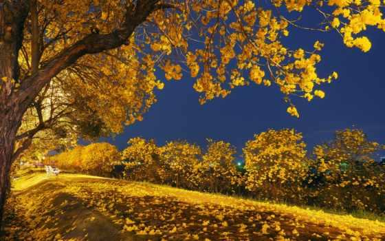 осень, природа, листья, trees, пасть, landscape, красавица, falling, park, blue,