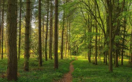 лес, тропинка, trees, пейзажи -, landscape, природа, floresta, company, paisagem,