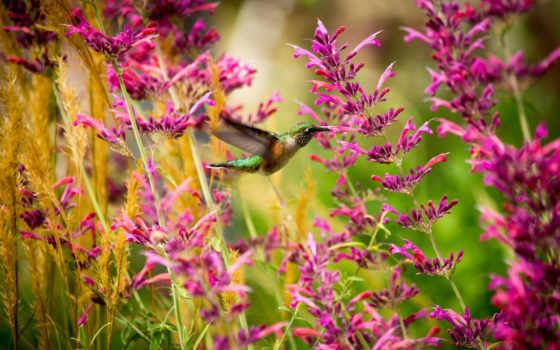 красивые, калибри, цветы
