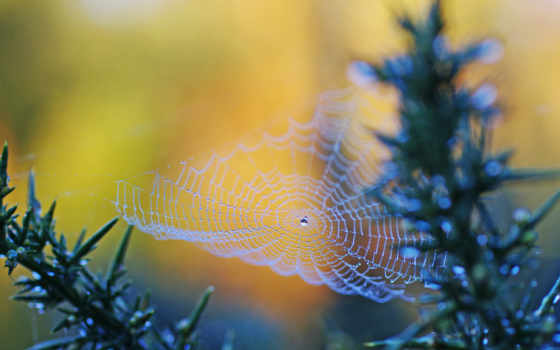 роса на паутинке