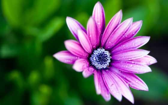 макро, цветы, лепестки