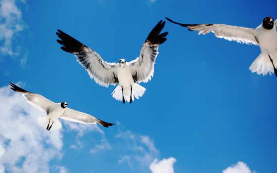 птицы, птиц
