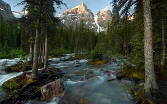 широкоформатные, national, park, канадский, trees, лес, горы, канада, sarek, banff,