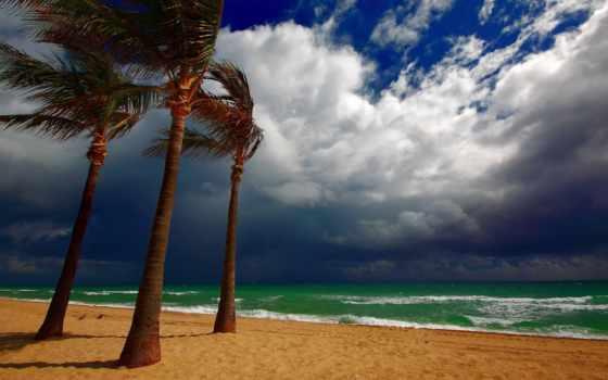 пальмы, tropics, море, ветер, пляже, берег, тучи, palm, пляж, природа, fone,