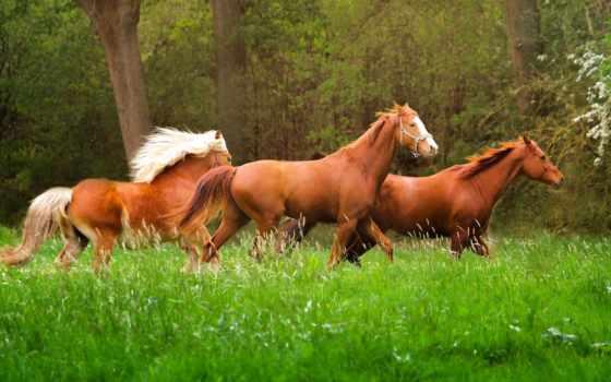 фон, планшетный, mac, лошади, images,