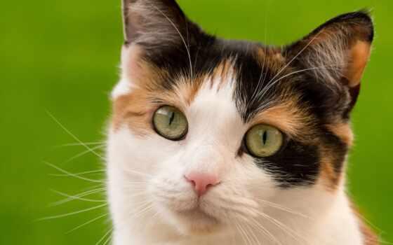 кот, глаз, назад, день, зелёный, красивый, subscribe