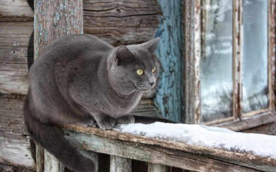 кошка, kot, dom, бесплатный, серый, poza, котенок, животное, чёрный, personazh, глаз