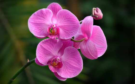 Цветы 20014