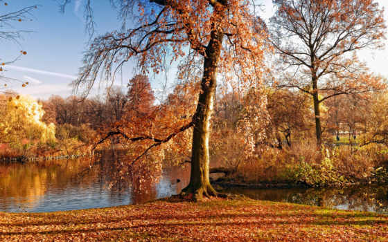 листва, скинали, разделе, желтые, природа, trees, каталог, осенние, осень, лес,