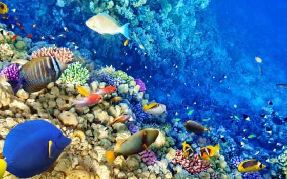world, underwater,