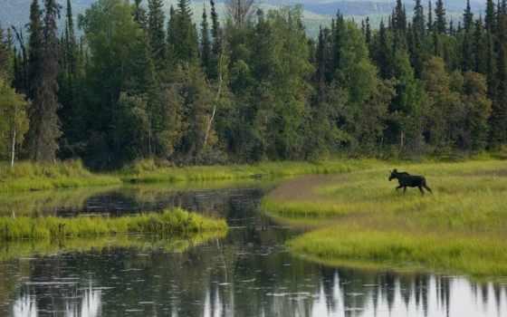 природа, zhivotnye, дикая, summer, широкоформатные, лось, лес, нояб, макро,