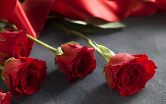 red, roses, love, romantic, день, valentine, праздники, розы,