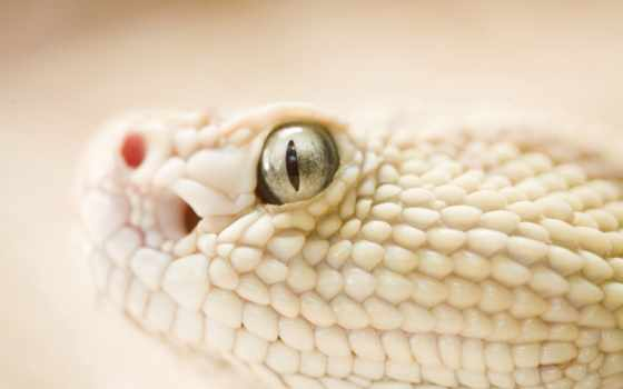 skin, змей, viper