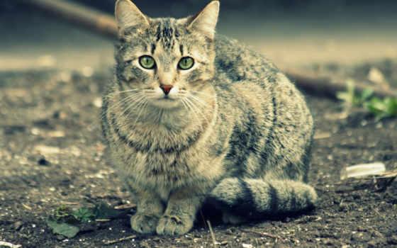 зеленые, кошак, глаза, cat, прикольный, животные, gray, похожие, cats, картинок, изображение, смотрите, picsfab, фабрика, взгляд, кошки,