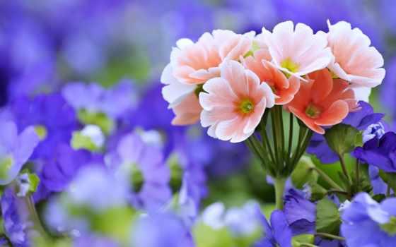 цветы, природа, полевые