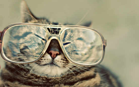 очки, кот, kot, hipster, изображение,