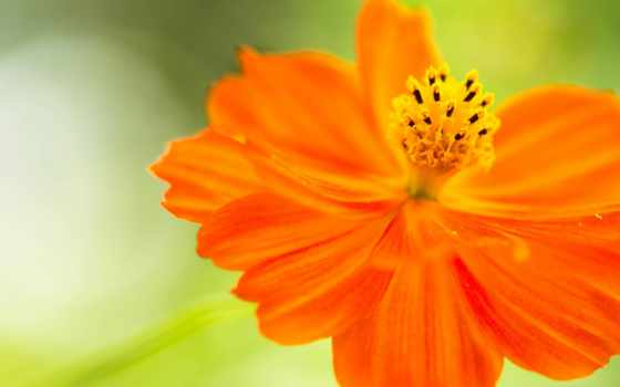 цветок, фотографий, creativ