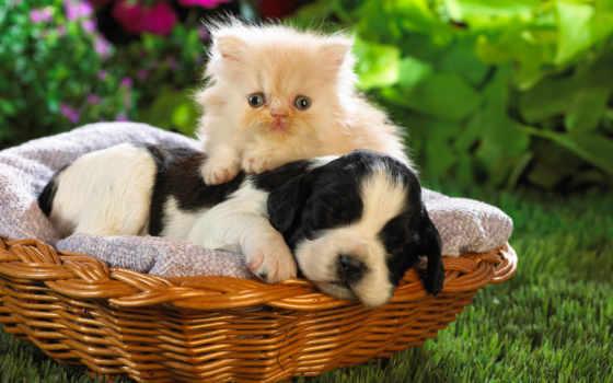 los, mundo, mas, lindos, animales, que, perros, del, perritos, tiernos,