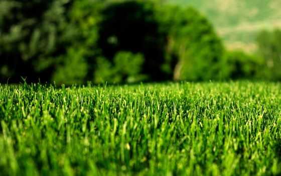 трава, дома, land, земляне, dramatičnost, газон, tráva, dodá, okrasná,