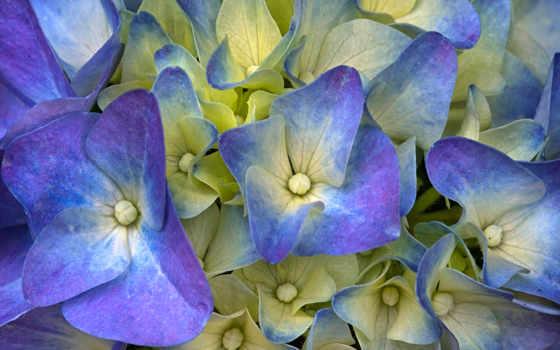 питомник, цветы, images, photos, фотографий,