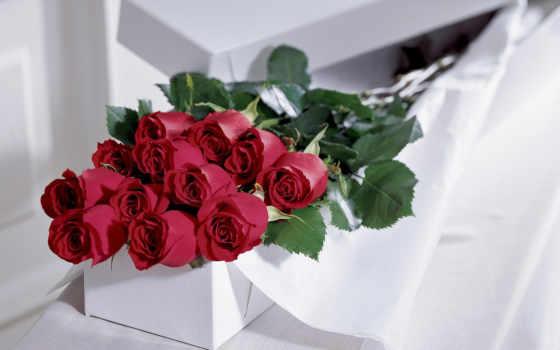 розы, дар, cvety