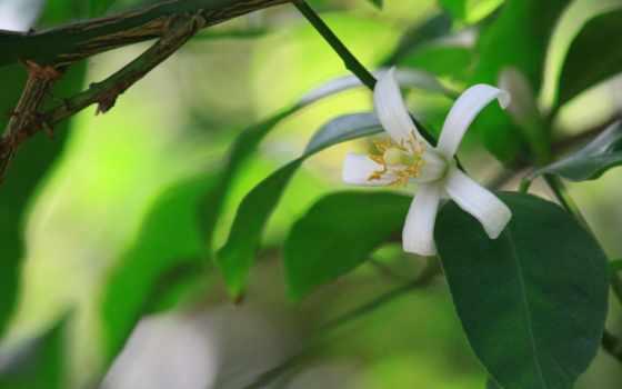 цветы, макро, happy, birthday, widescreen, бабочка, листва, scene, medieval,