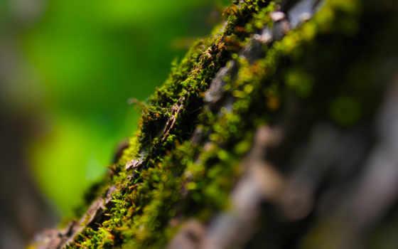 макро, боке, блики, потрясающие, высокого, качества, макрофотографии, мха, дерево,