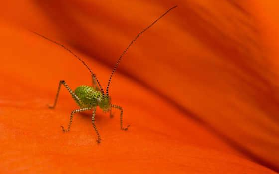 кузнечик, полосатый, насекомое, усики, surface, spider, sheet,