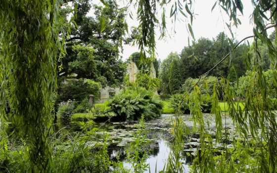 лес, широкоформатные, images