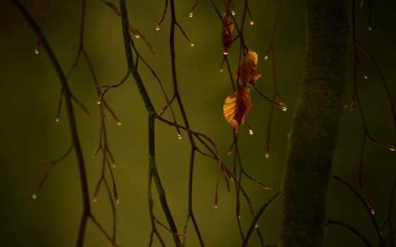 разрешениях, different, листьев, drop, осенних,