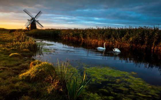 mill, река, birds, swans, англия, reeds, птица, landscape, лес,