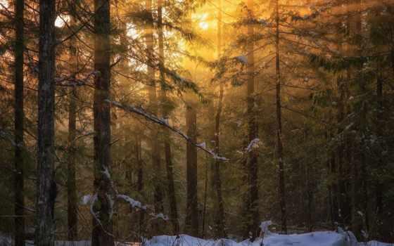 vancouver, остров, британская, colombia, природа, лес, winter, свет,