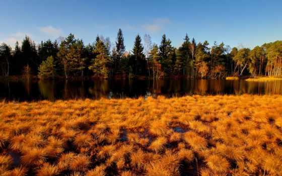 природа, осень, favourite, лес, желтые, трава, листва, красивые,