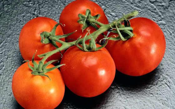помидоры, cherry, москве, договорной, купить, цене, tomato, фрутомания, помидоров, сайте, звоните,