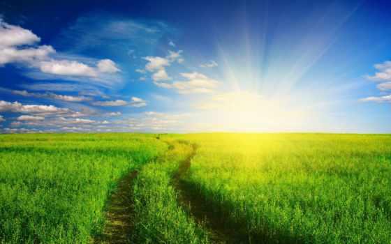 дорога, summer, трава, природа, летнее, утро, поле, images, love, fotoapple,