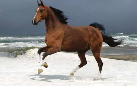 лошадь, бегущая, волнам