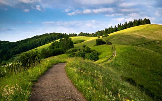 sendero, montaña, fondos