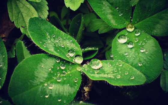 макро, pinterest, pictures, pin, растения, роса, листва, hội,