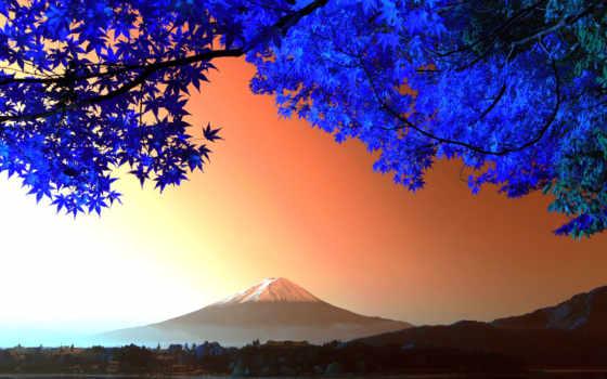 япония, japanese, осень, вулкан, дерево, гора, ветки, фудзияма, tokyo,