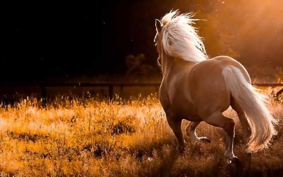 лошади, яndex, широкоформатные, лошадей, лошадь, unsubscribe, subscribe, zhivotnye,